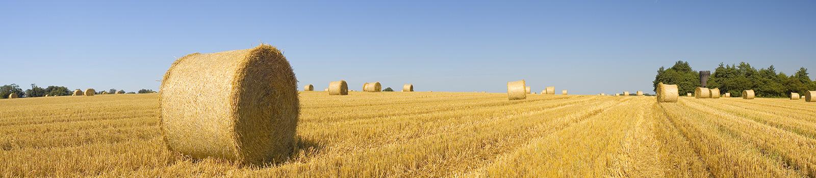 Bale-field2